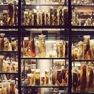 Naturkundemuseum-Cold-Room
